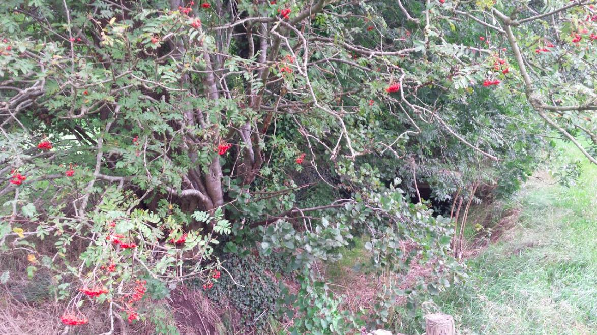 voedselbos sept 19 vogelkers